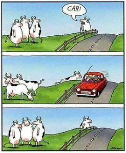 Gary Laron's Cows - from 'The Far Side'
